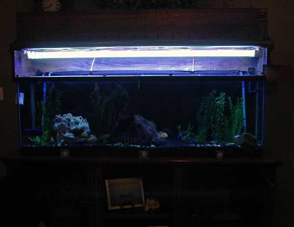 Сколько стоит люминесцентная лампа для аквариума